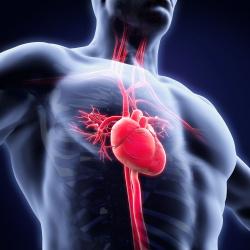Detección de riesgo cardiovascular
