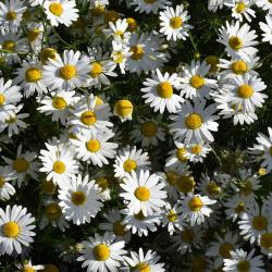 Consejo en homeopatía y fitoterapia
