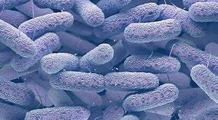 Ús responsable dels antibiòtics