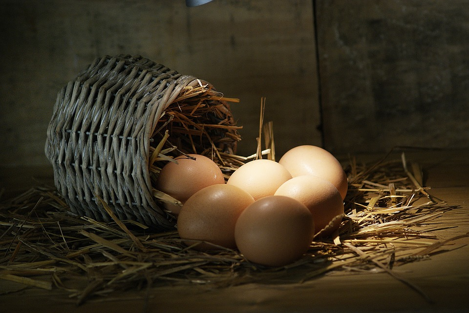Saps com escollir un bon parell d'ous?
