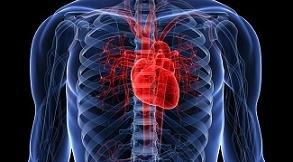 Como cuidar de tu salud cardiovascular