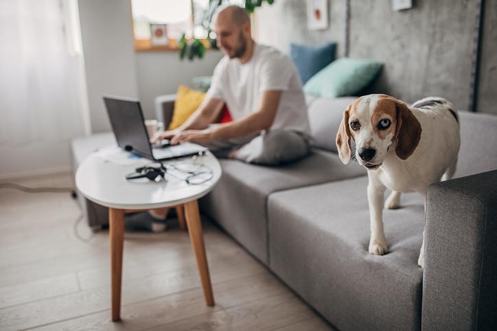 ¿Por qué es importante desparasitar a tu mascota?